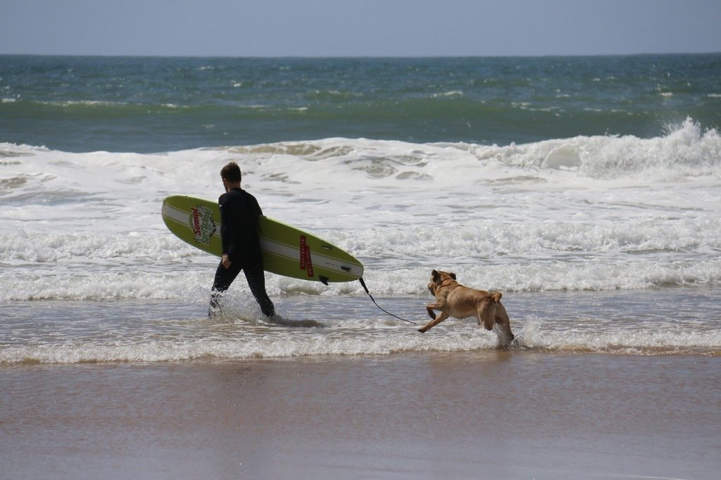 サーファーと犬